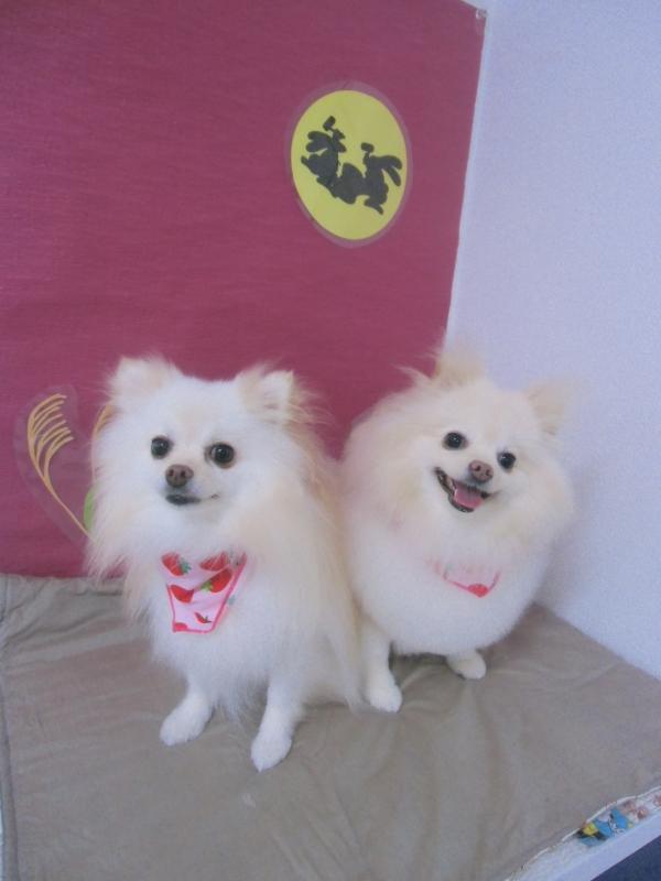 ポメリーちゃん(左)ココちゃん(右)